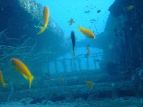 Bamburi Beach Hotel: Dianni Wreck