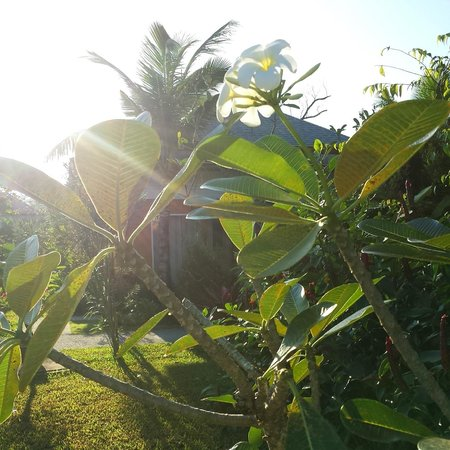 Beyond Resort Khaolak: Frangipani
