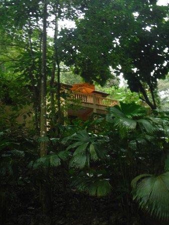 Villas Pico Bonito: A cabin in the rain forest for budget travellers