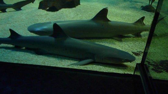 Berjaya Langkawi Resort - Malaysia : Requins au Underwater world