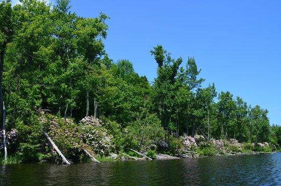 Savoy Mountain State Forest : North pond