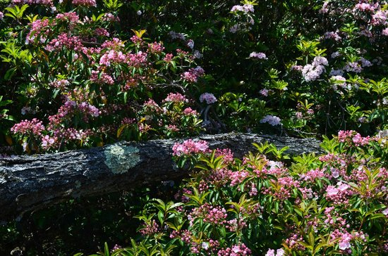 Savoy Mountain State Forest : Blossom