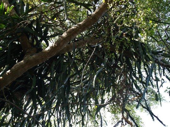 Jungle Island: удивительный мир растений