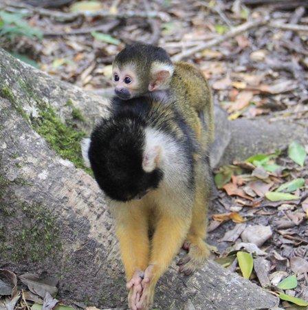 Monkeyland Primate Sanctuary