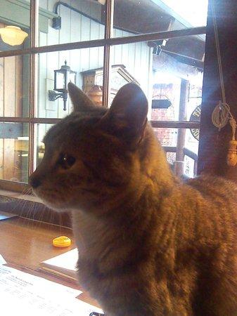 Narrow Gauge Inn : The Inn's Cat