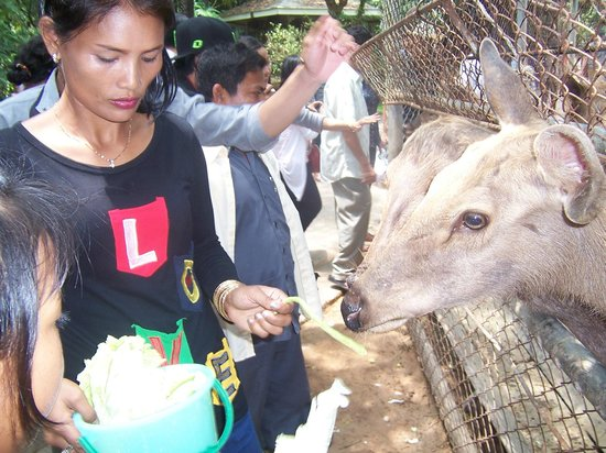 Koh Kong, Camboja: feeding the deer