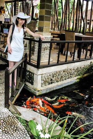 Sukun Bali Cottages : Кормим рыбок