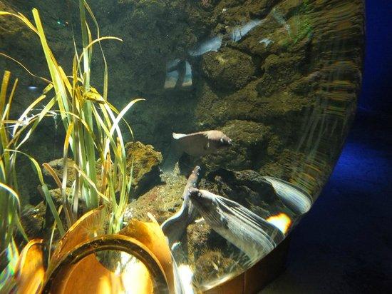 Lanzarote Aquarium : Niezłe gagatki