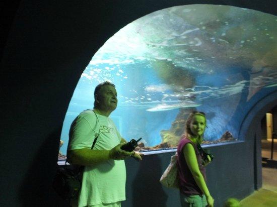 Lanzarote Aquarium : Rekiny - szkalan kopuła