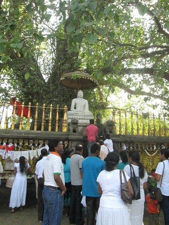 Kelaniya Raja Maha Vihara: bodhi tree?