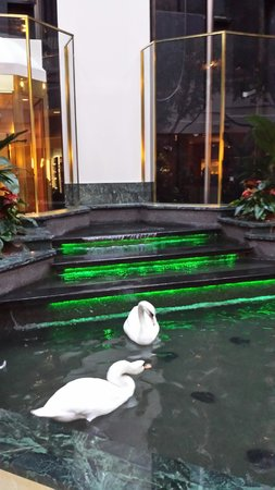 Embassy Suites by Hilton Dallas Near the Galleria: Swans