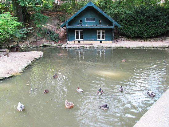 Heimat-Tierpark Olderdissen: Пруд с утками