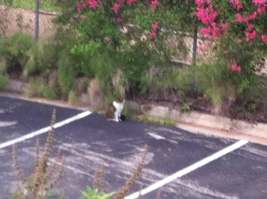 Habitat Suites Hotel: Several cats live on the property