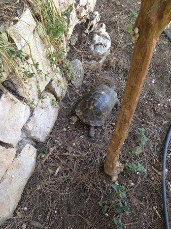 Papillon Belvil Hotel : Повсюду черепахи