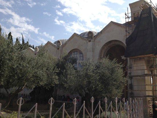 Garden of Gethsemane : Гефсиманский сад