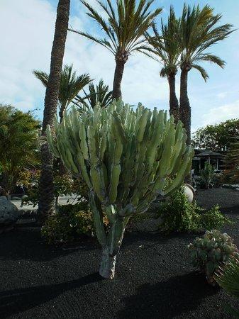 H10 Suites Lanzarote Gardens: H10 Lanzarote Gardens