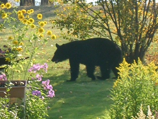 Ridgeview Gardens Bed and Breakfast: Fall Visitor