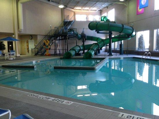 International Plaza Hotel Toronto Airport : Pool