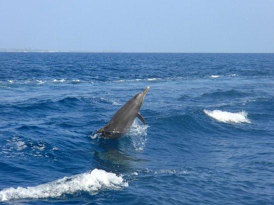 Rihiveli by Castaway Hotels & Escapes: Les Dauphins à 200m de l'île
