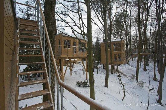 W Drzewach: houses