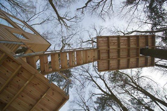 W Drzewach: tarace