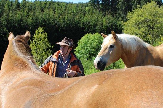 Ponyhof Stadtkyll: bei den Pferden
