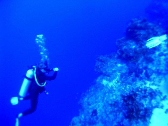 Dive Balam: What a drop off!