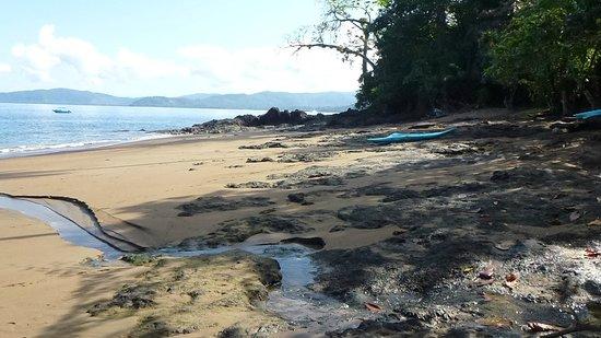 Copa de Arbol Beach and Rainforest Resort: Copa de Arbol Beach in the morning