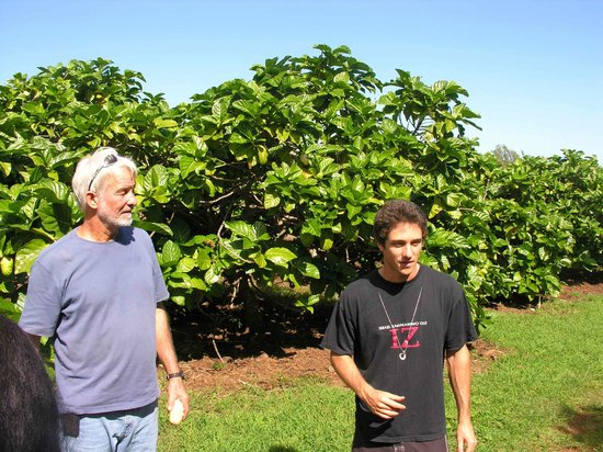 Kilauea, HI: Steve and Dylan in front of noni trees