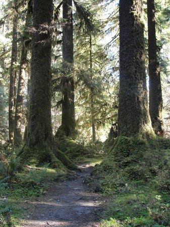 Hoh Rain Forest: Hoh River Trail