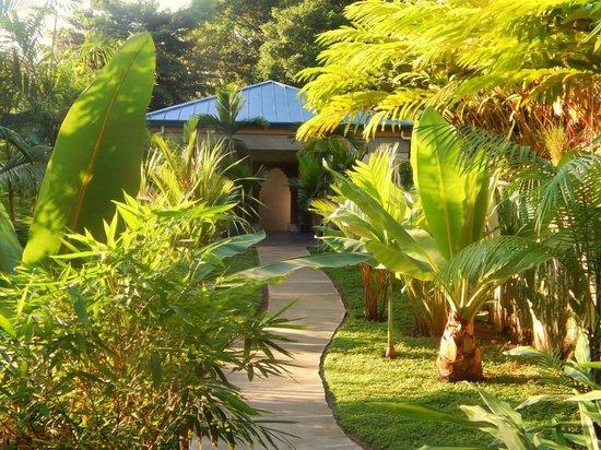 Prana Rainforest Retreat: PATHWAY TO HEAVEN