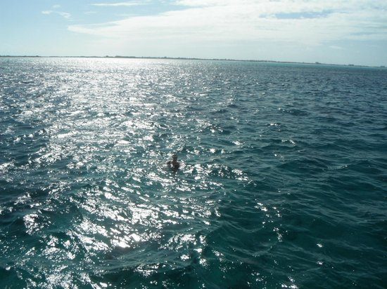 Club Med Turkoise, Turks & Caicos : La plongée en apnée