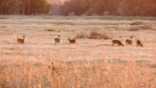 Myakka River State Park: Love how the sun was just setting over this clearing  when a family of deer walked up
