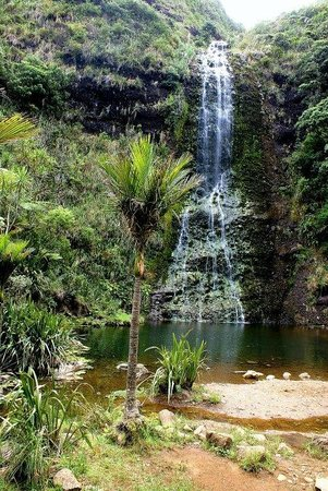 Waitakere Ranges: Waitakere Falls