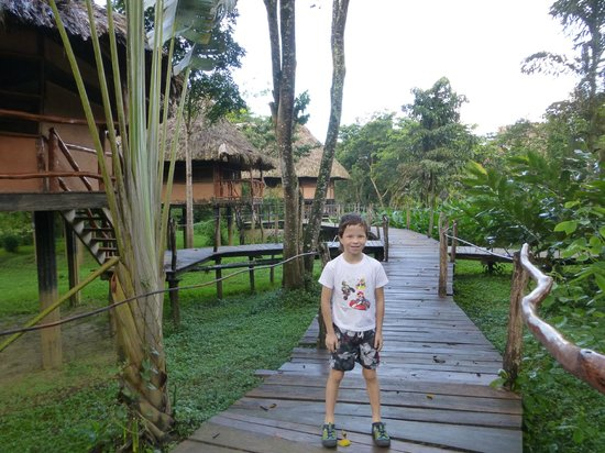 Cotton Tree Lodge: Our son loved taking walks on the raised walkway to see birds and watch for howler monkeys.