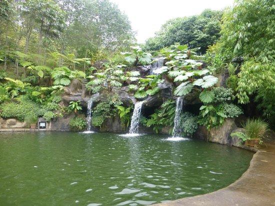 La Paz Waterfall Gardens: Lago de truchas