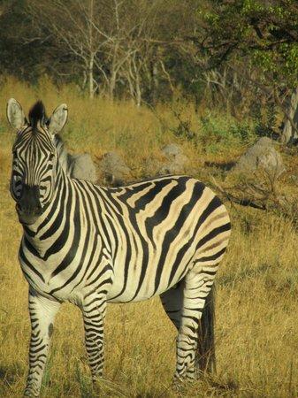 The Old Bridge Backpackers: On the Safari