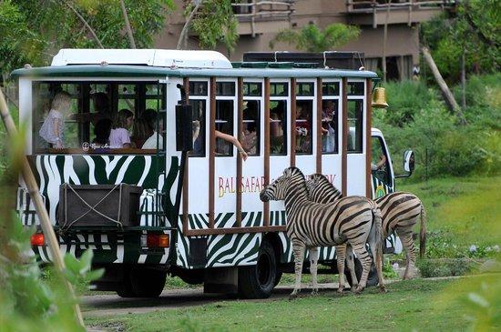 Bali Safari & Marine Park : Transport bali safari