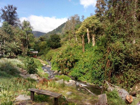 EcoTreat: Riachuelo que pasa detrás de las cabañas