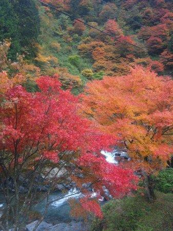 Hotel Nosegawa: 秋の野迫川村