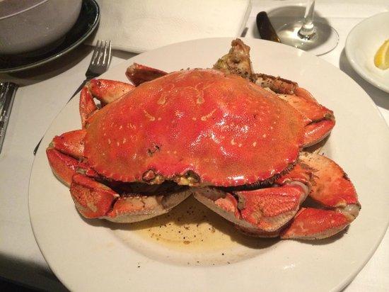 Crustacean: Here is the Beauty