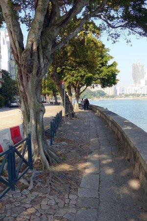 Sai Van Lake: Avenida da Republica - lined with shady trees