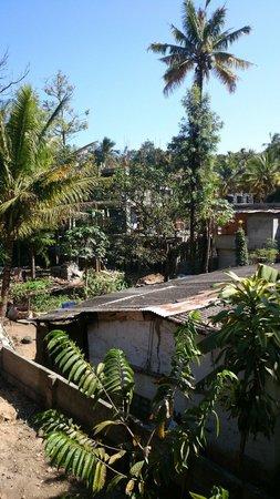Ammu's Homestay : Vue depuis la terrasse