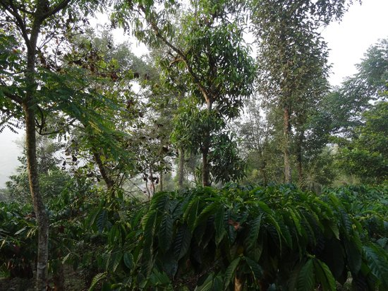 Grassroots Wayanad : View from the porch