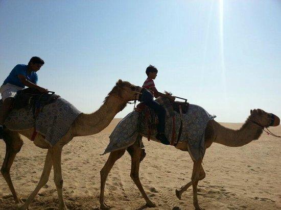 Liwa Hotel: camel ride