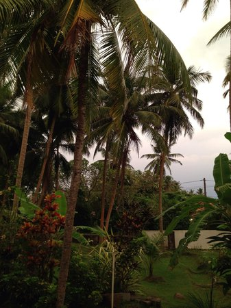 Villa Balapitiya Beach: Villa garden