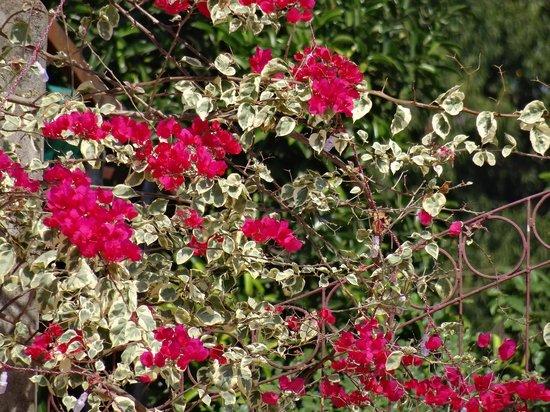 Hacienda De Goa Resort: flowers by pool