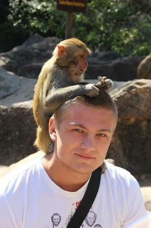 обезьянкой