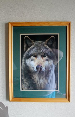 Great Wolf Lodge: Our room decor