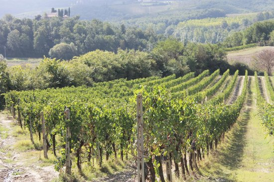 Fun in Tuscany: Vines